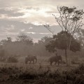 Ethereal-Elephants-1