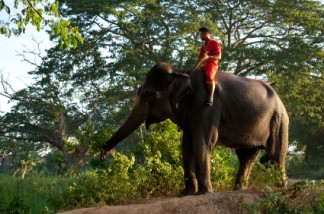 istockphoto_12568170-riding-the-elephant